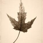 Identity: Fragile
