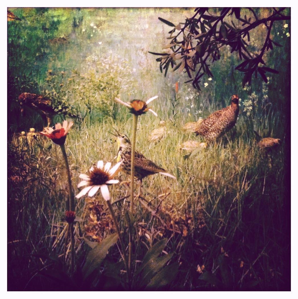 bird diorama