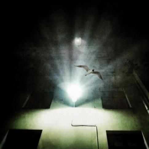 Bird II ~ Alexey Ovsyannikov