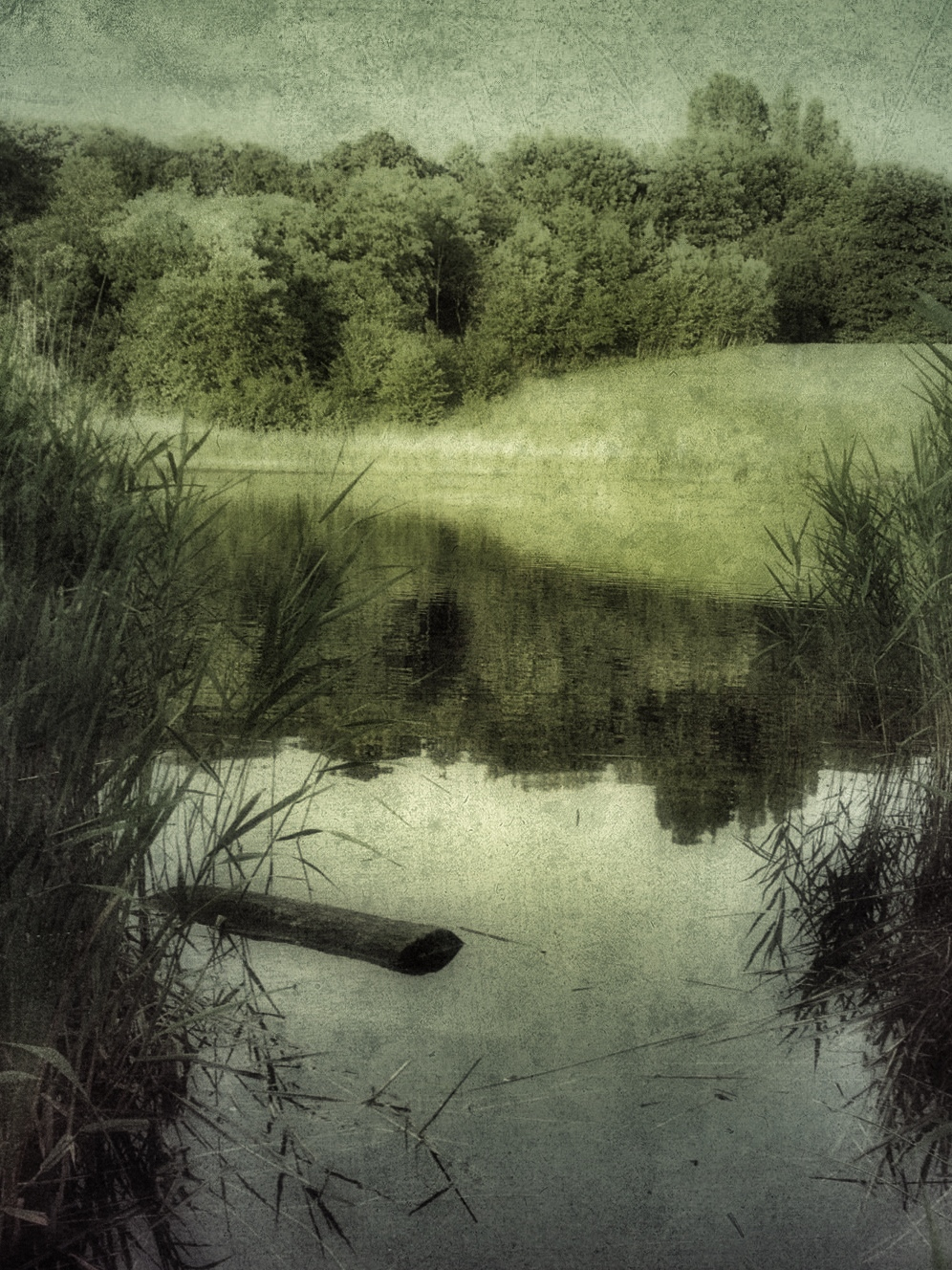 Dorthe Rye  Rasmussen ~ Quiet morning