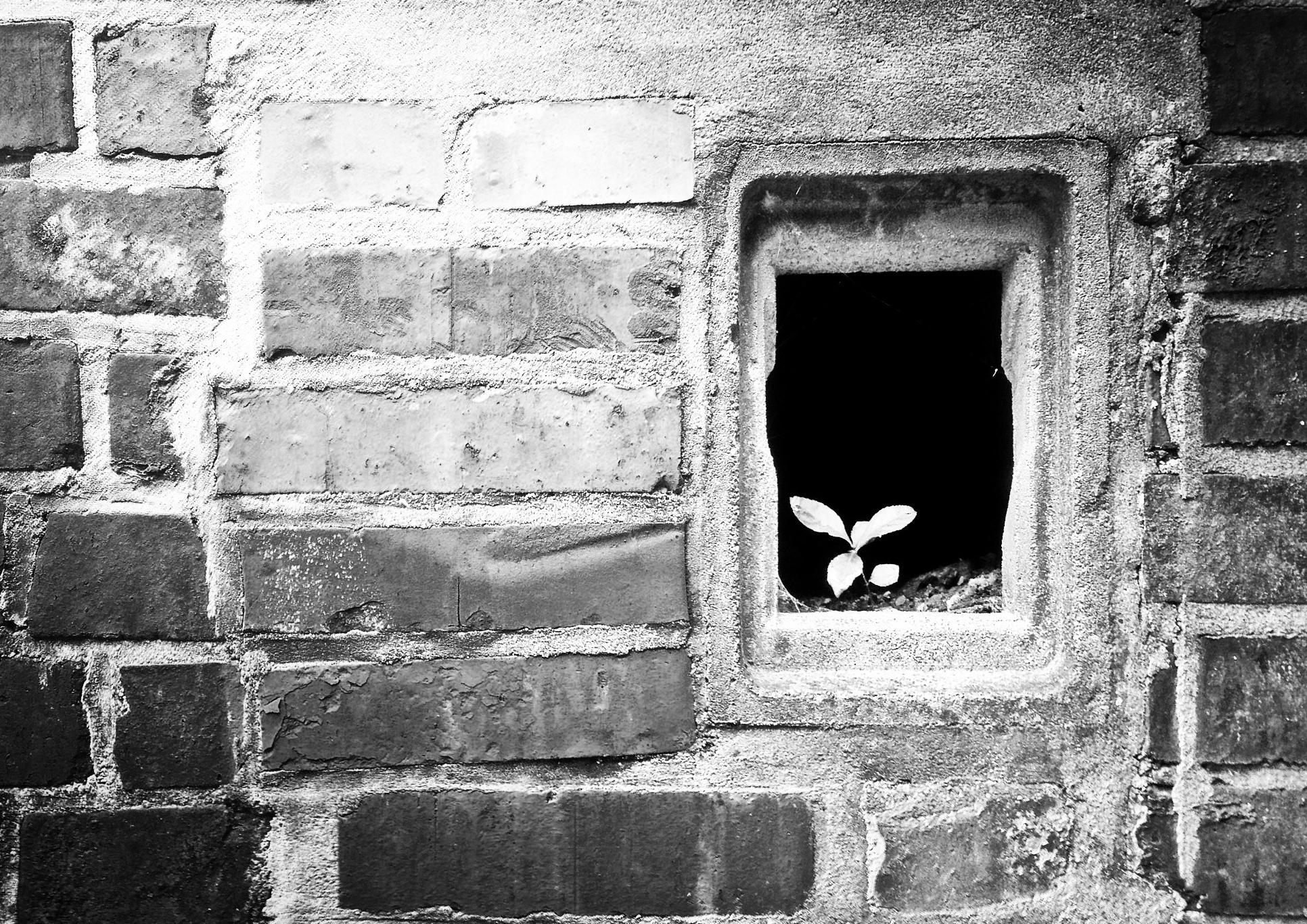 Hans Borghorst ~ There's still hope