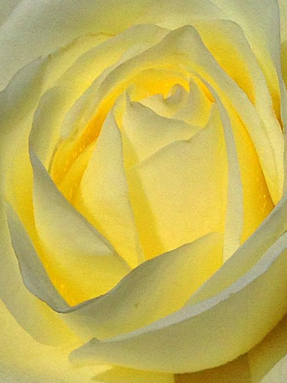 {daily pic} Reed Johnson ~ Lemon Embrace