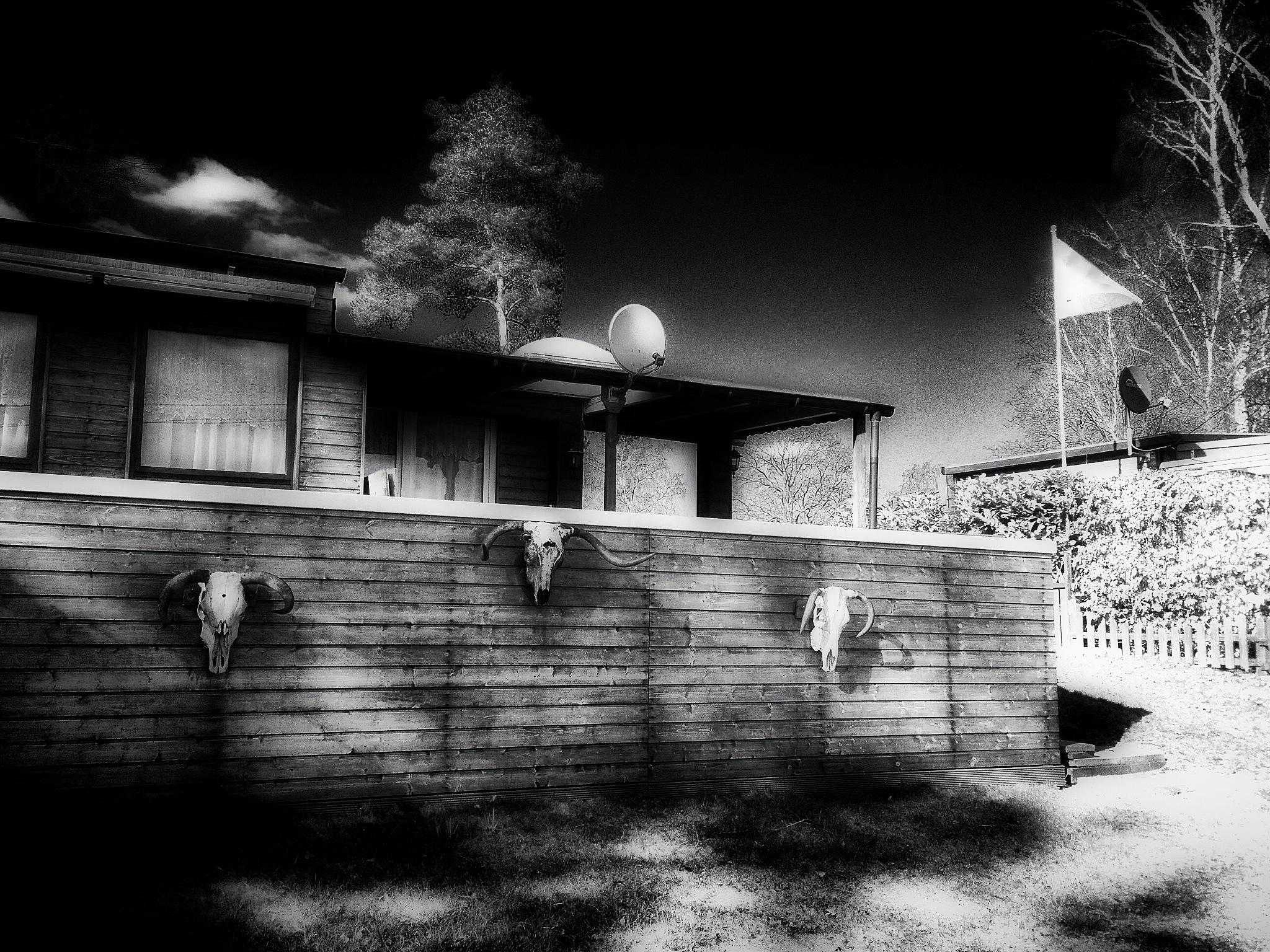 Hans Borghorst ~ Three Skulls