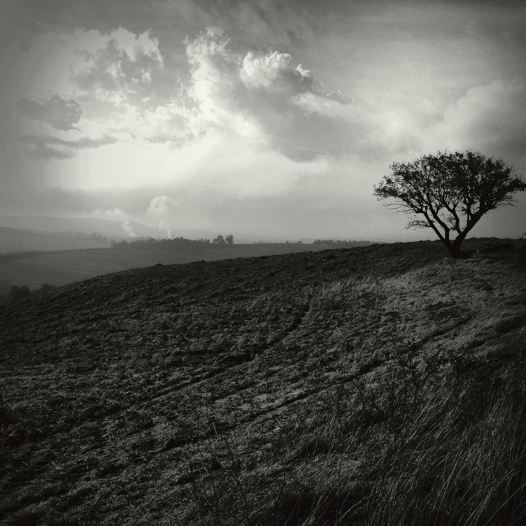 Gianluca Ricoveri ~ Solitary tree