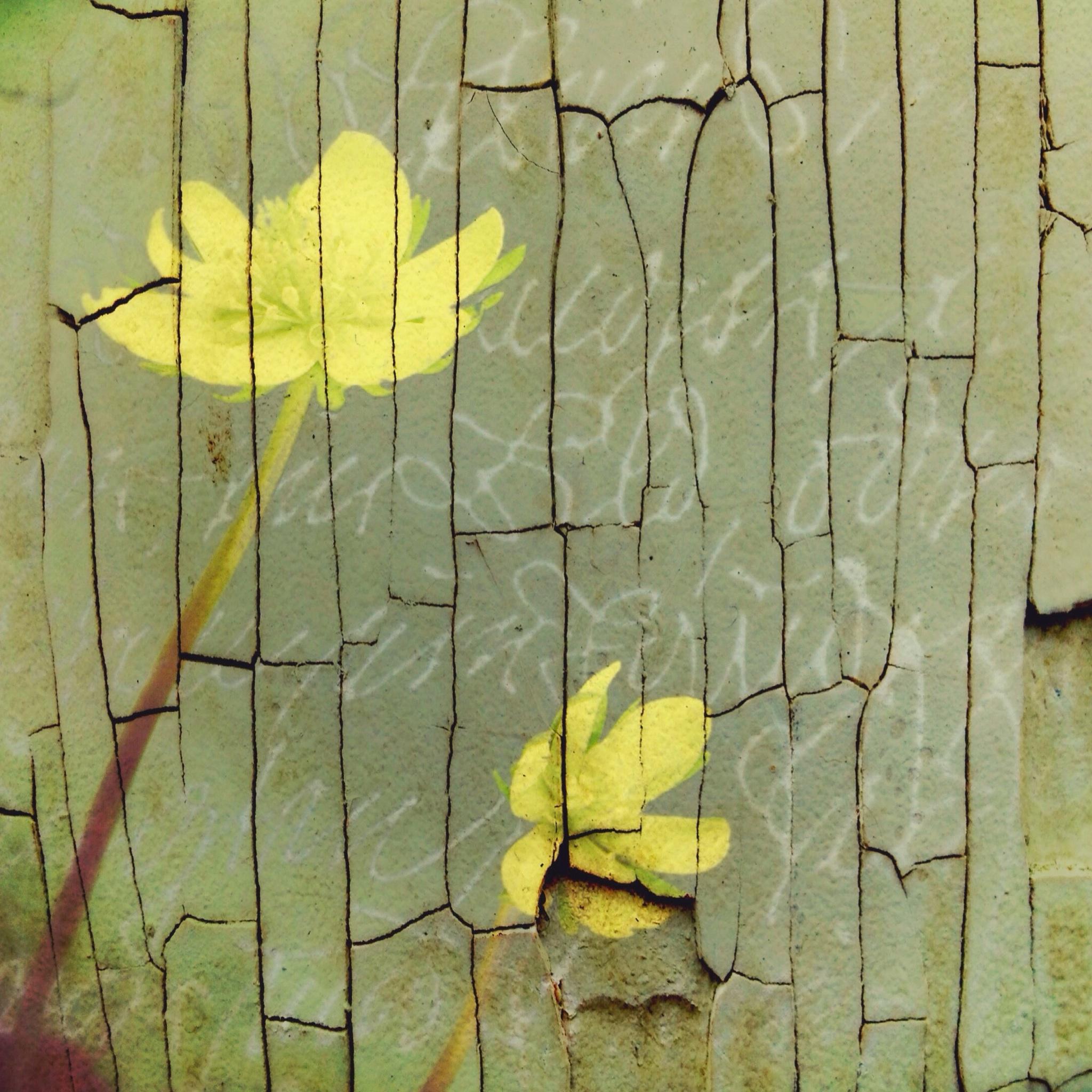 Kristin Moeller ~ Cracked nature
