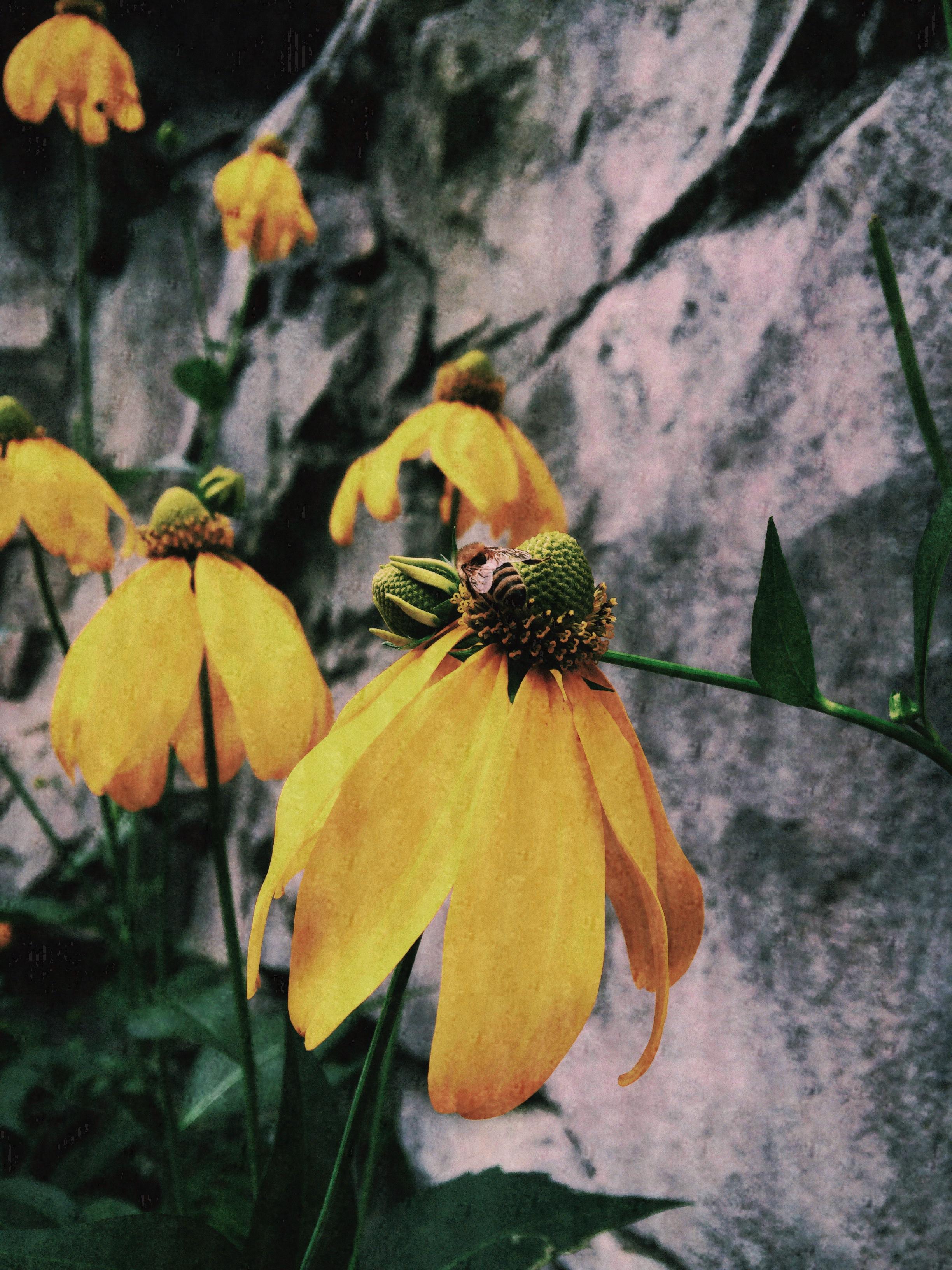 Lanie Heller ~ Summer's End