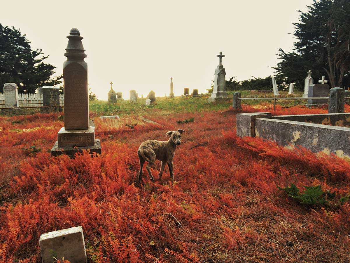 {daily pic} Colin Remas Brown ~ Poe In The Graveyard