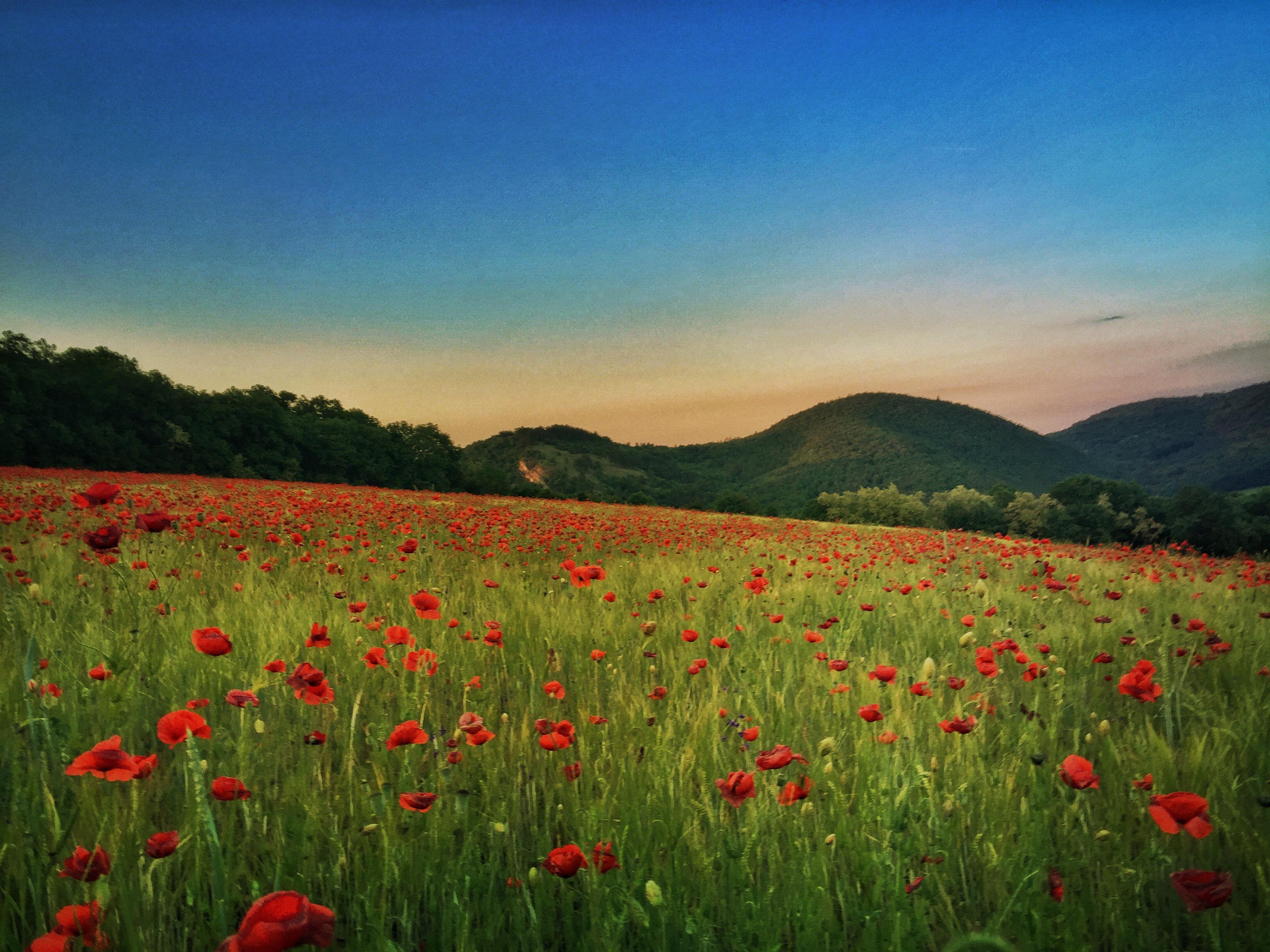 Andrew Proudlove ~ Transcendental Landscape
