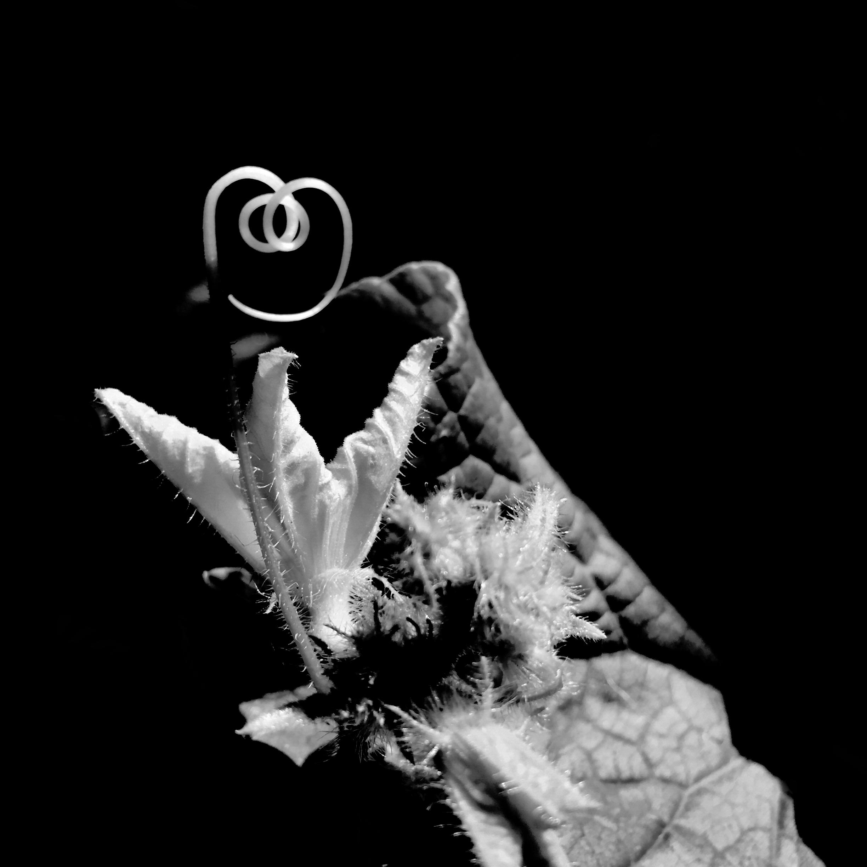 {gallery} Aldo Pacheco ~ Dark Harvest 3