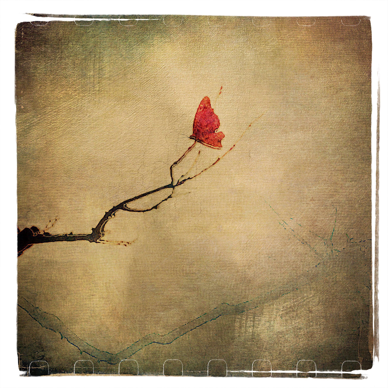 Judy Green ~ Butterfly
