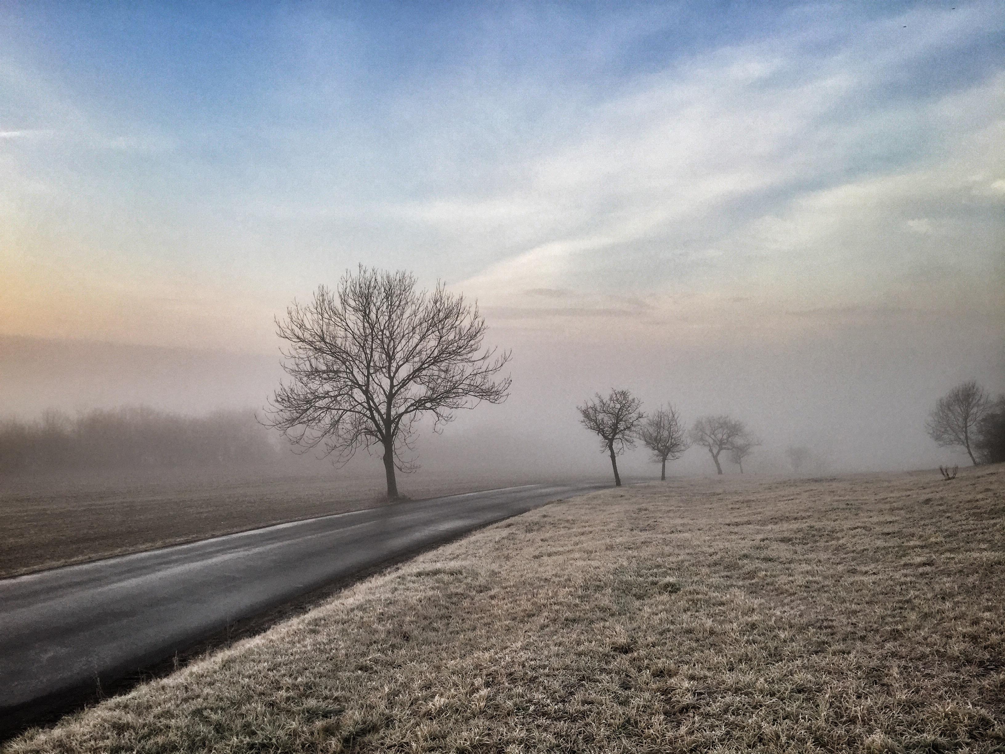Andrew Proudlove ~ Trees in the Mist