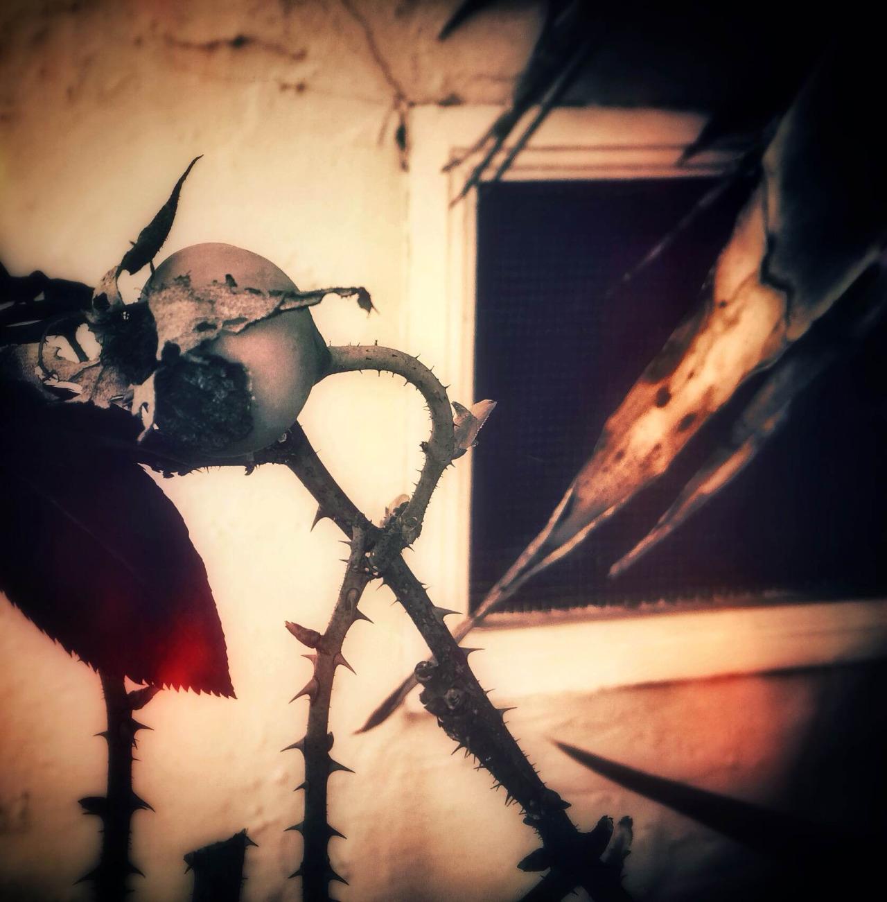 {tumblr} Meri Walker ~ In The Blood Of Eden