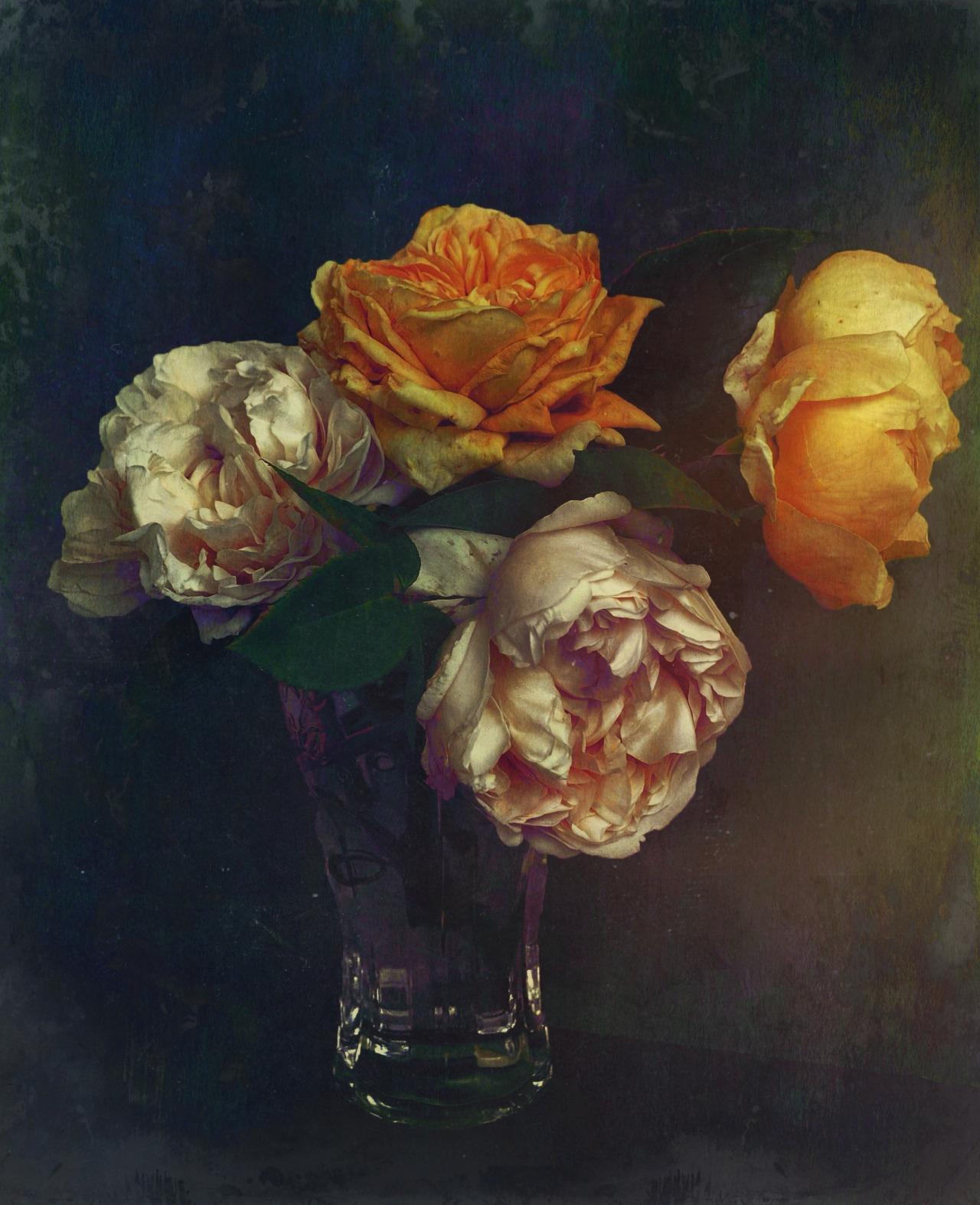 {tumblr} Gianluca Ricoveri ~ Roses