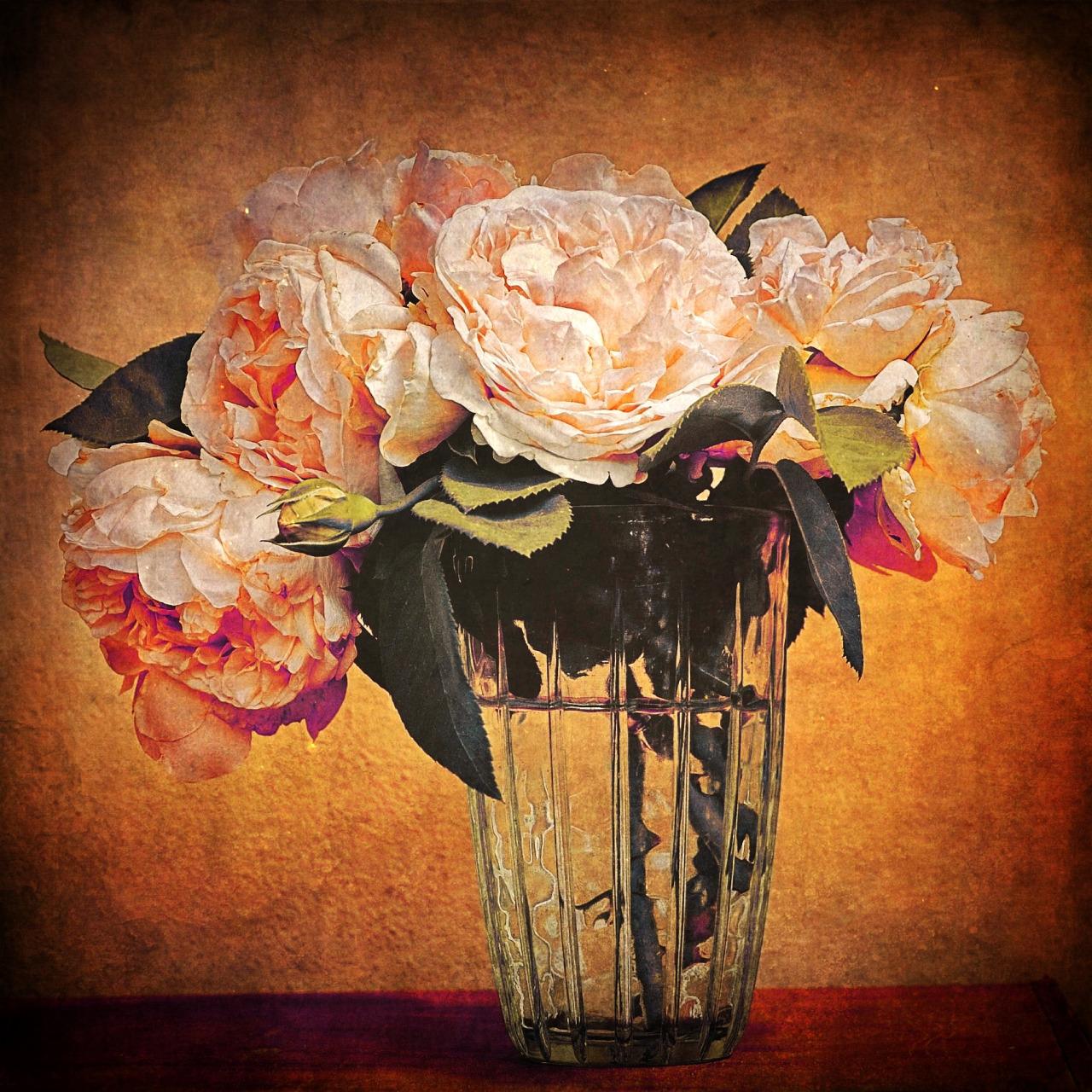 {tumblr}  Gianluca Ricoveri ~ Roses 2