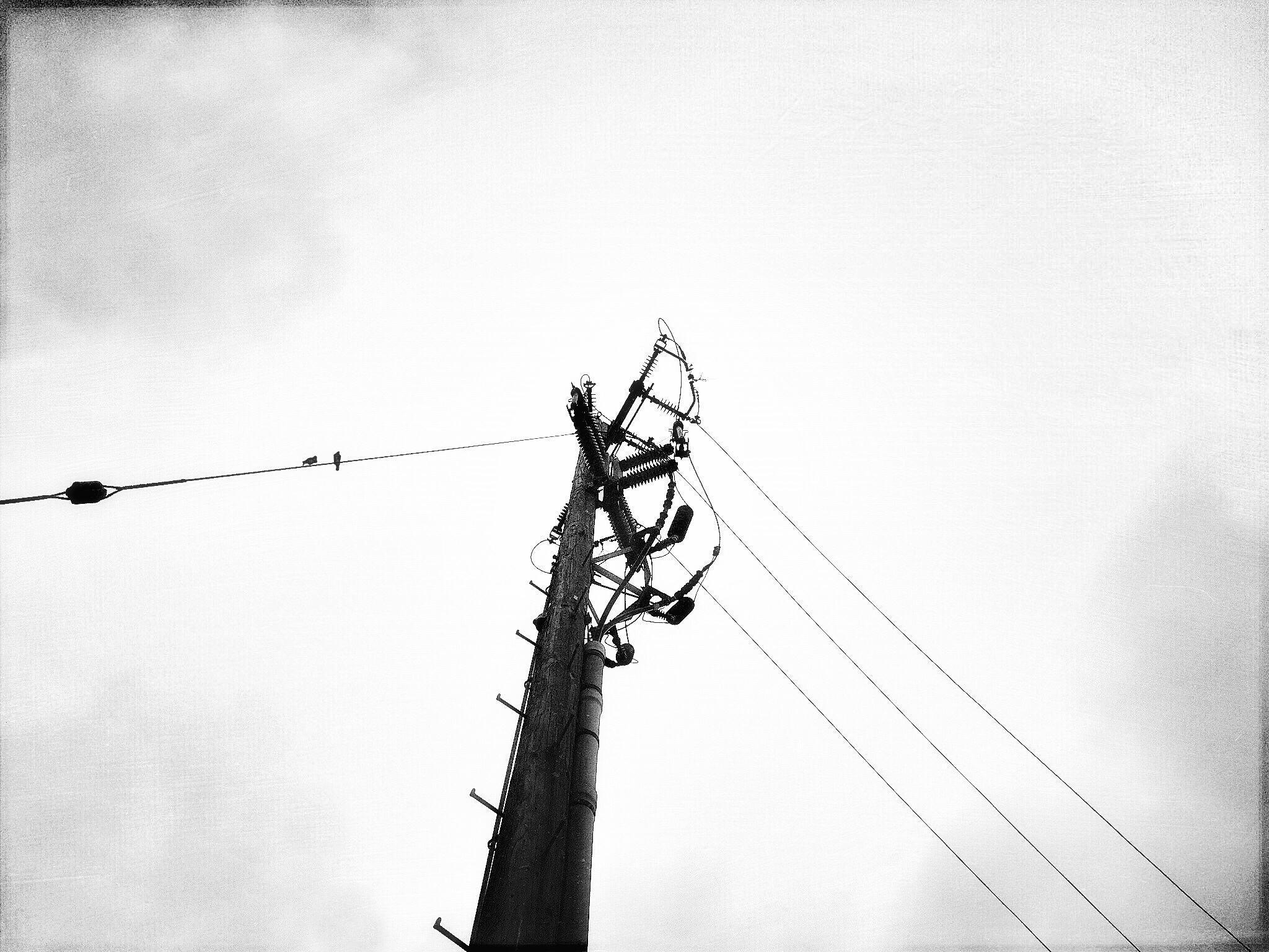 Lisa Peters ~ Gray days