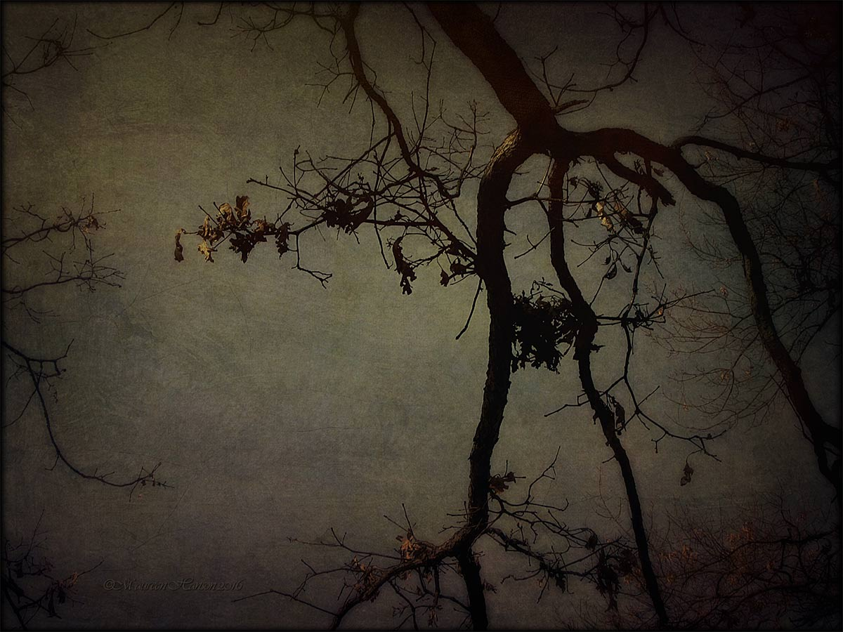 Maureen Hanson ~ Bare Trees #DSLR2iOS