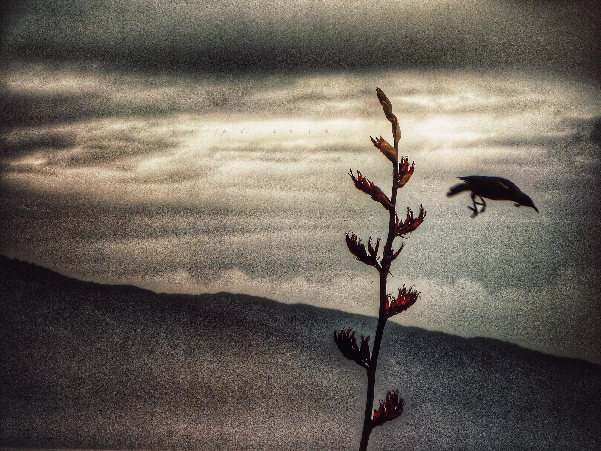 {dslr} Leon Williams ~ Leap