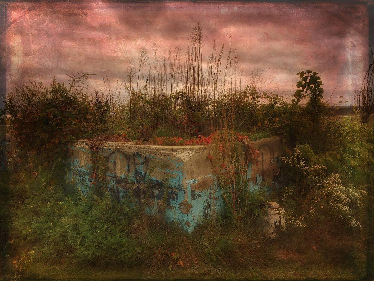 Andrea Koerner ~  Overgrown