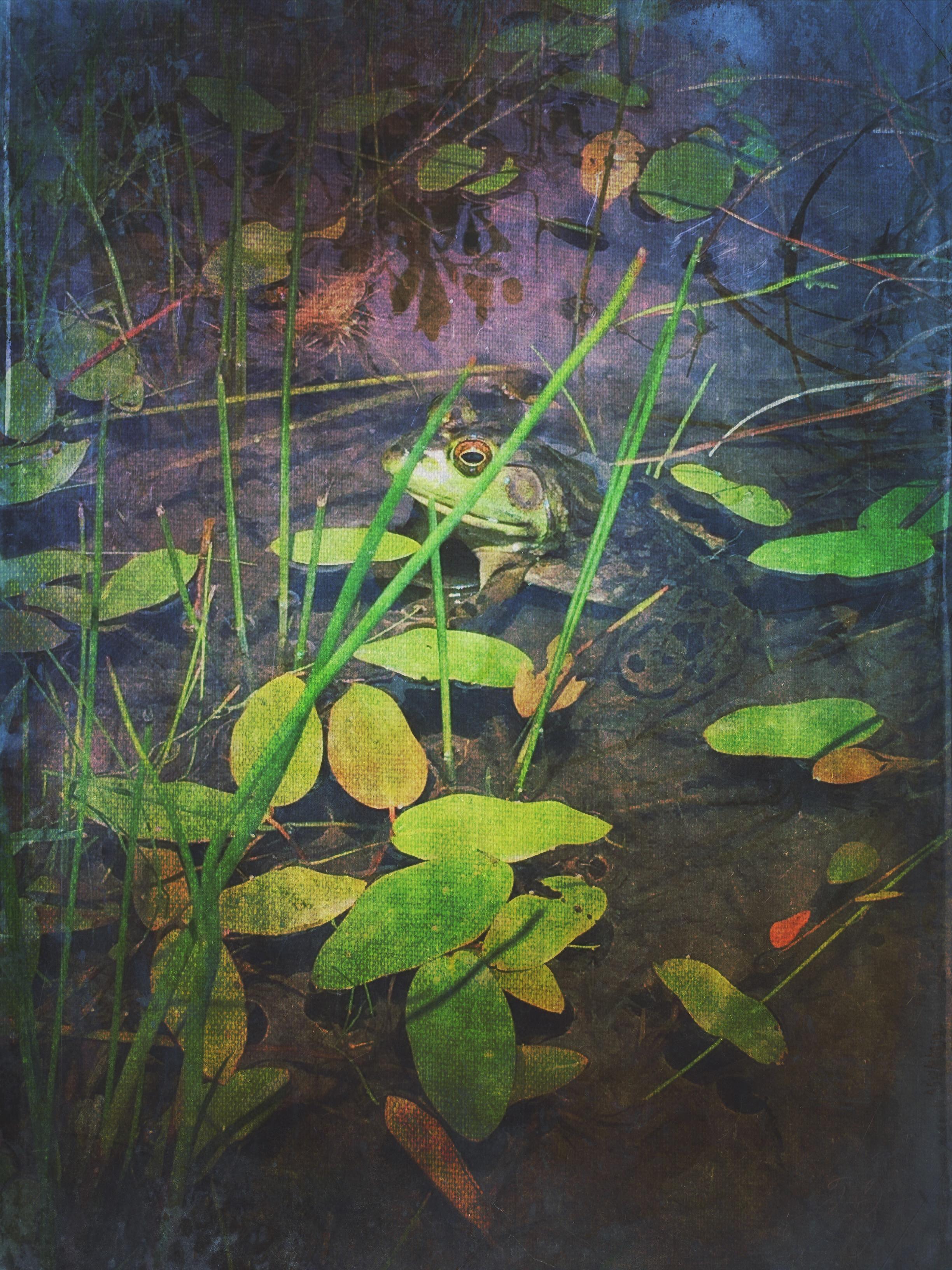 Andrea Koerner ~ Frog