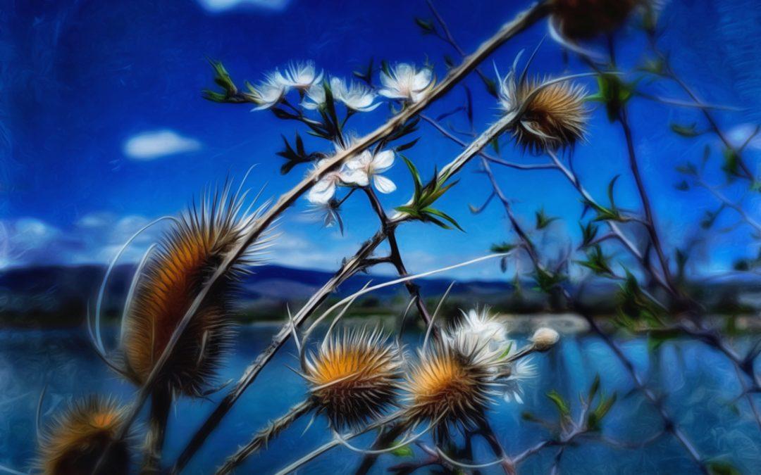 Kate Zari Roberts ~ Lake MacIntosh