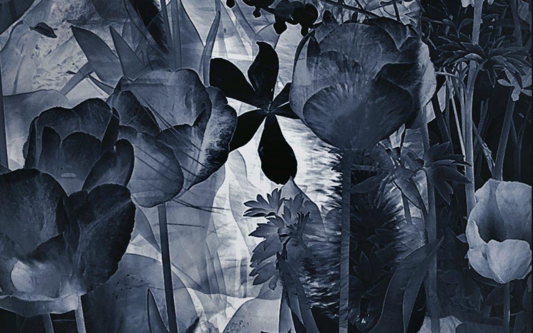 Meri Walker ~ In the Night Garden.