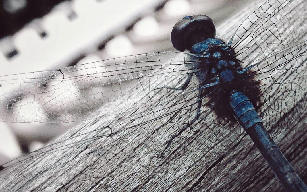 Ling Orr ~ Blue Whispering Angel