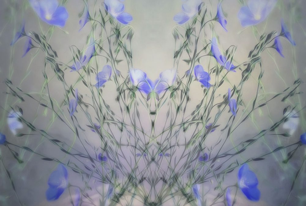 Kate Zari Roberts ~ Gallery 3
