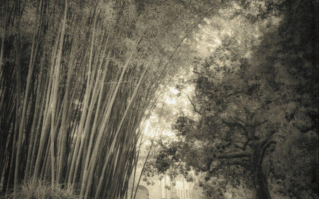 Gianluca Ricoveri ~ Untitled