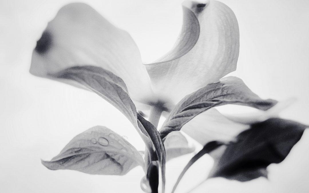 Meri Walker ~ Pure Poetry.