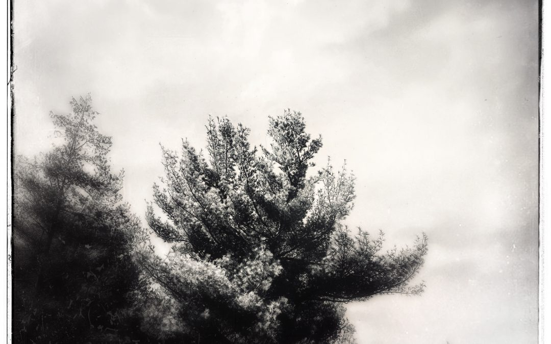 Adam Mead ~ Burnished sky