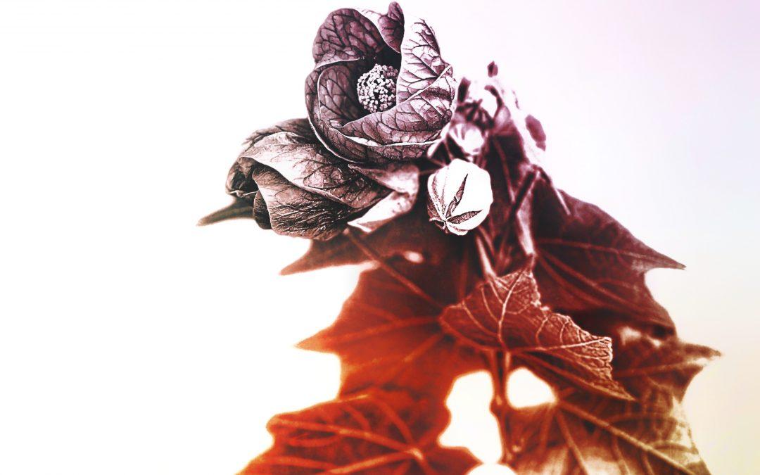 Leon Williams ~ Autumn Leaves