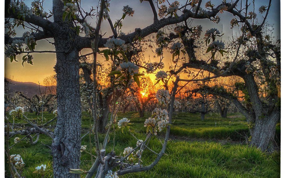 David Scott Leibowitz ~ Pears / Sunset 2