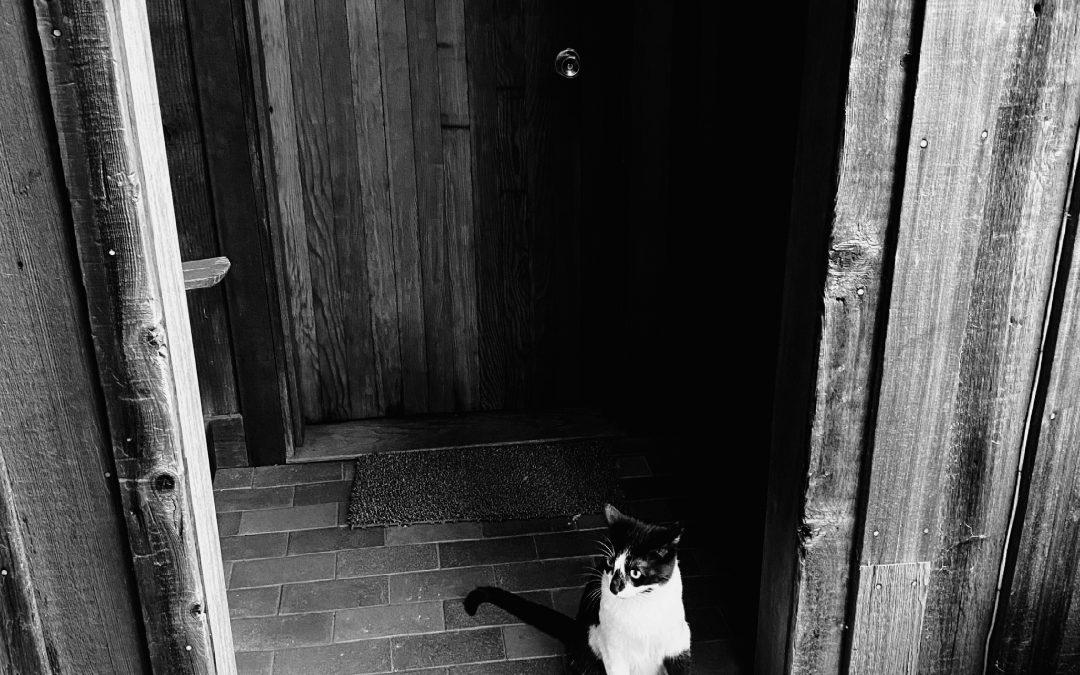Knox Bronson ~ I Am Waiting