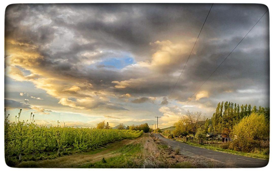 David Scott Leibowitz ~ Country Road Sunset / Talent