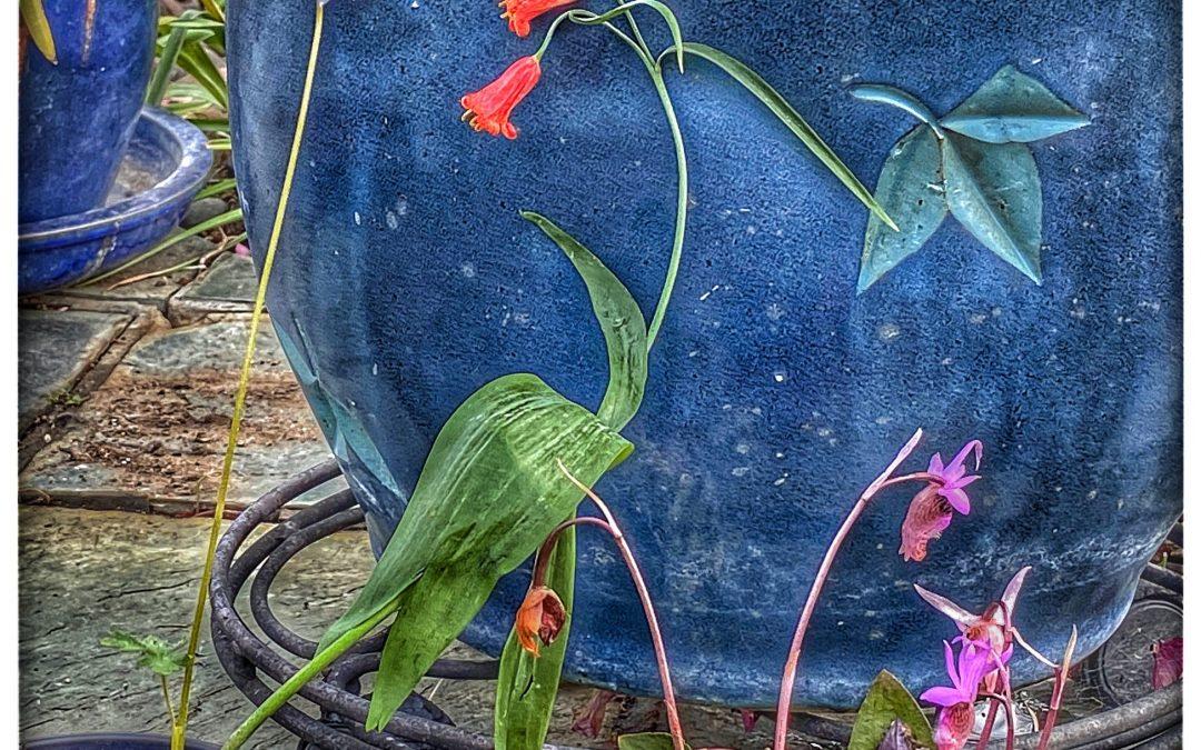 David Scott Leibowitz ~ Captured Wildflowers / Flower Pot