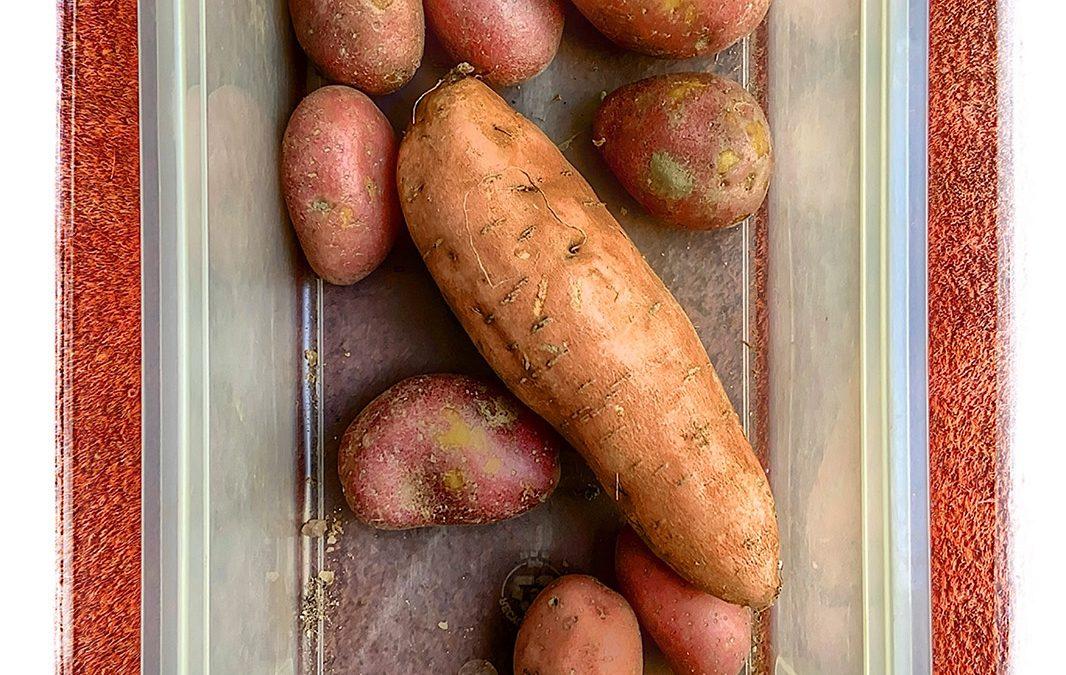 {sunday} Jan Uiterwijk ~ Potato-Potatoes